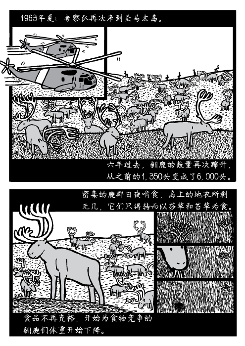 人口可持续性。1963年夏:考察队再次来到圣马太岛。六年过去,驯鹿的数量再次蹿升, 从之前的1,350头变成了6,000头。密集的鹿群日夜啃食,岛上的地衣所剩 无几,它们只得转而以莎草和苔草为食。食品不再充裕,开始为食物竞争的 驯鹿们体重开始下降。