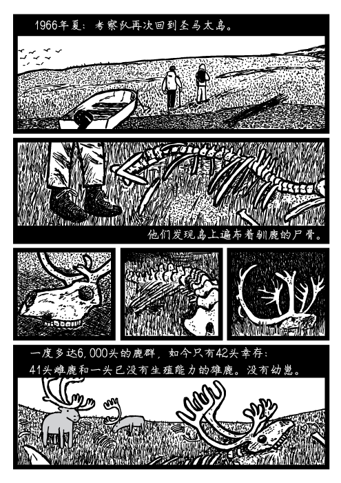 人口可持续性。1966年夏:考察队再次回到圣马太岛。他们发现岛上遍布着驯鹿的尸骨。一度多达6,000头的鹿群,如今只有42头幸存: 41头雌鹿和一头已没有生殖能力的雄鹿。没有幼崽。