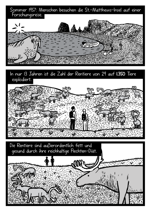 Männer Forscher Rentierherde Cartoon. Insel Walross Zeichnung. Sommer 1957: Menschen besuchen die St.-Matthews-Insel auf einer Forschungsreise. In nur 13 Jahren ist die Zahl der Rentiere von 29 auf 1.350 Tiere explodiert. Die Rentiere sind außerordentlich fett und gesund durch ihre reichhaltige Flechten-Diät.