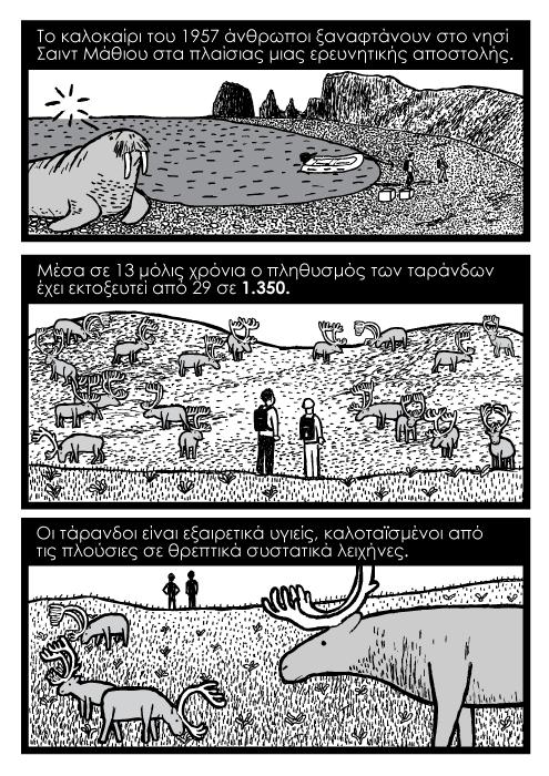 τάρανδοι καρτούν. Το καλοκαίρι του 1957 άνθρωποι ξαναφτάνουν στο νησί Σαιντ Μάθιου στα πλαίσιας μιας ερευνητικής αποστολής. Μέσα σε 13 μόλις χρόνια ο πληθυσμός των ταράνδων έχει εκτοξευτεί από 29 σε 1.350. Οι τάρανδοι είναι εξαιρετικά υγιείς, καλοταϊσμένοι από τις πλούσιες σε θρεπτικά συστατικά λειχήνες.