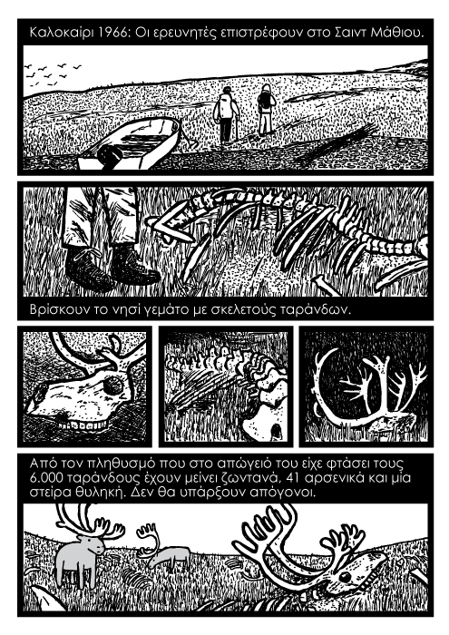 τάρανδοι καρτούν. Καλοκαίρι 1966: Οι ερευνητές επιστρέφουν στο Σαιντ Μάθιου. Βρίσκουν το νησί γεμάτο με σκελετούς ταράνδων. Από τον πληθυσμό που στο απώγειό του είχε φτάσει τους 6.000 ταράνδους έχουν μείνει ζωντανά, 41 αρσενικά και μία στείρα θυληκή. Δεν θα υπάρξουν απόγονοι.