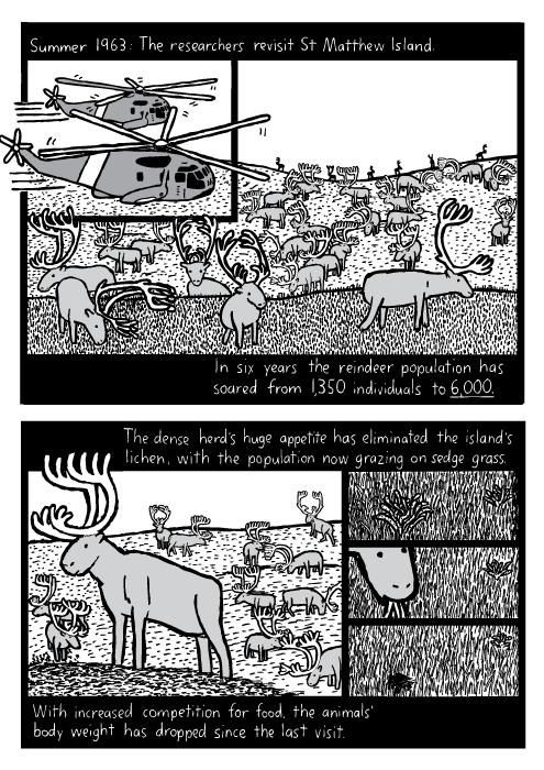 St Matthew Island Reindeer Comic About Overpopulation By Stuart