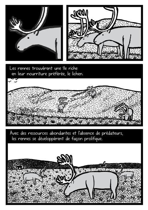 BD de rennes en train de brouter. Dessin de collines herbeuses. Les rennes trouvèrent une île riche en leur nourriture préférée, le lichen. Avec des ressources abondantes et l'absence de prédateurs, les rennes se développèrent de façon prolifique.