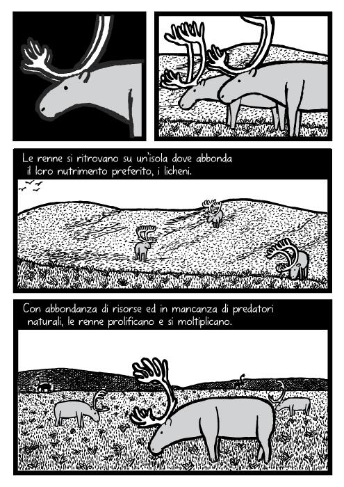 Renne pascolano sull'erba. Disegno di campi erbosi. Le renne si ritrovano su un'isola dove abbonda il loro nutrimento preferito, i licheni. Con abbondanza di risorse ed in mancanza di predatori naturali, le renne prolificano e si moltiplicano.