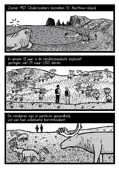 Mensen onderzoekers rendier kudde cartoon. Eiland walrus tekening. Zomer 1957: Onderzoekers bezoeken St. Matthew-Eiland. In amper 13 jaar is de rendierpopulatie explosief gestegen van 29 naar 1,350 dieren. De rendieren zijn in perfecte gezondheid, vol van hun voedzame korstmosdieet.