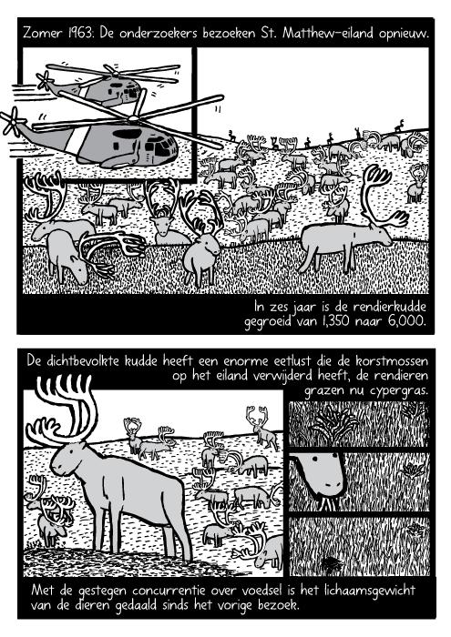 Helicopter rendier kudde cartoon. Rendieren eten gras tekening. Zomer 1963: De onderzoekers bezoeken St. Matthew-Eiland opnieuw. In zes jaar is de rendierkudde gegroeid van 1,350 naar 6,000. De dichtbevolkte kudde heeft een enorme eetlust die de korstmossen op het eiland verwijderd heeft, de rendieren grazen nu cypergras. Met de gestegen concurrentie over voedsel is het lichaamsgewicht van de dieren gedaald sinds het vorige bezoek.