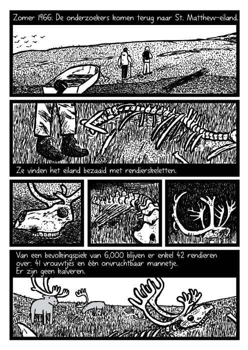 Rendier beenderen cartoon. Dood rendier gewei tekening. Zomer 1966: De onderzoekers komen terug naar St. Matthew-Eiland. Ze vinden het eiland bezaaid met rendierskeletten. Van een bevolkingspiek van 6,000 blijven er enkel 42 rendieren over: 41 vrouwtjes en één onvruchtbaar mannetje. Er zijn geen kalveren.