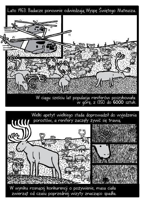 Lato 1963: Badacze ponownie odwiedzają Wyspę Świętego Mateusza. W ciągu sześciu lat populacja reniferów poszybowała w górę, z 1350 do 6000 sztuk. Wielki apetyt wielkiego stada doprowadził do wyjedzenia porostów, a renifery zaczęły żywić się trawą. W wyniku rosnącej konkurencji o pożywienie, masa ciała zwierząt od czasu poprzedniej wizyty znacząco spadła.