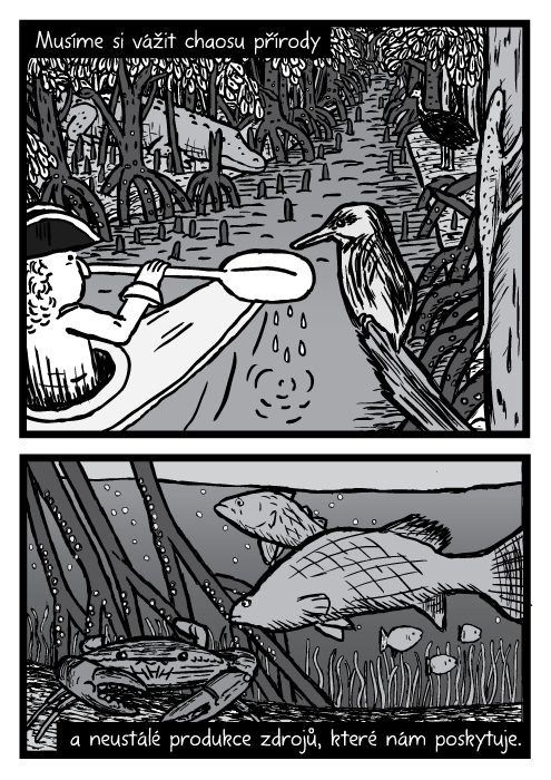 Kajak mangrovy kresba. Muž kánoe pták ještěr krokodýl kasuár. Ryba barramundi krab podvodní komiks. Musíme si vážit chaosu přírody a neustálé produkce zdrojů, které nám poskytuje.