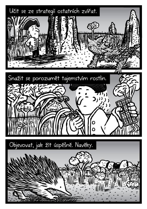 Australské vnitrozemí moloch ostnitý ještěr komiks. Buš ježura muž kresba. Učit se ze strategií ostatních zvířat. Snažit se porozumět tajemstvím rostlin. Objevovat, jak žít úspěšně. Navěky.