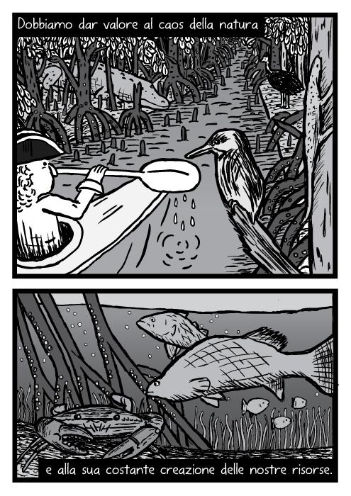 Vignetta kayak mangrovie. Uomo in canoa vicino a uccello lucertola coccodrillo. Disegno pesce barramundi granchio sott'acqua. Dobbiamo dar valore al caos della natura e alla sua costante creazione delle nostre risorse.