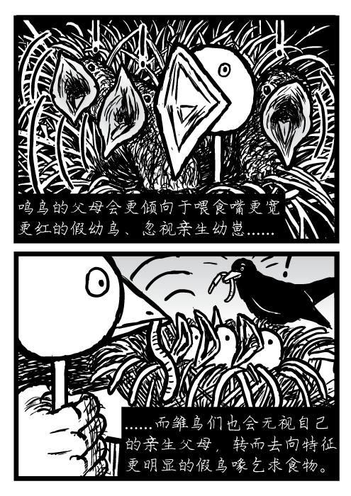鸣鸟的父母会更倾向于喂食嘴更宽 更红的假幼鸟、忽视亲生幼崽 而雏鸟们也会无视自己 的亲生父母,转而去向特征 更明显的假鸟喙乞求食物。