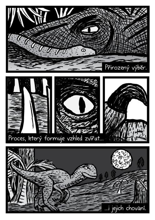 Velociraptor dinosaurus zub oko dráp kresba komiks. Přirozený výběr. Proces, který formuje vzhled zvířat…i jejich chování.