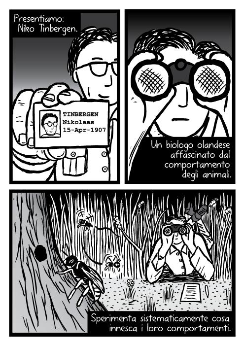 Disegno fumetto scienziato con binocoli. Presentiamo: Niko Tinbergen. Un biologo olandese affascinato dal comportamento degli animali. Sperimenta sistematicamente cosa innesca i loro comportamenti.
