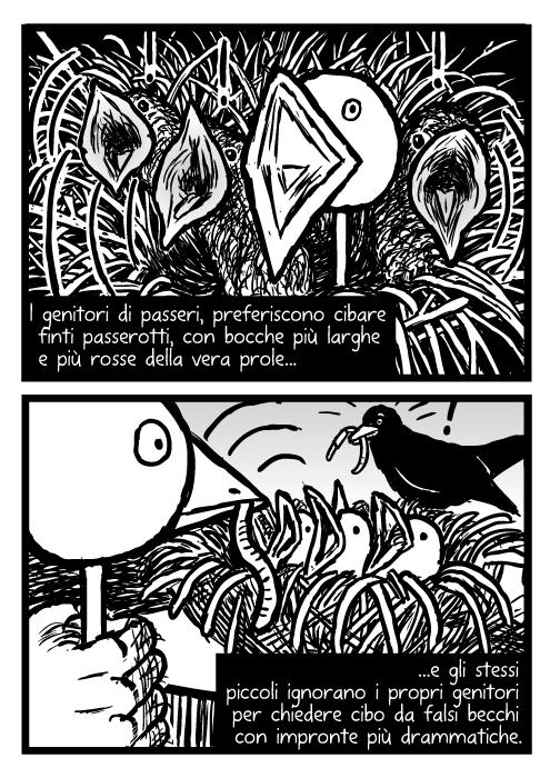 Uccellini. Disegno di nido di uccelli. I genitori di passeri, preferiscono cibare finti passerotti, con bocche più larghe e più rosse della vera prole e gli stessi piccoli ignorano i propri genitori per chiedere cibo da falsi becchi con impronte più drammatiche.