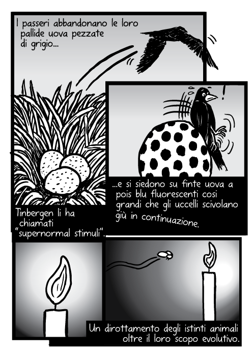 """Uccello nido uovo volando. Falena fiamma di candela disegno. I passeri abbandonano le loro pallide uova pezzate di grigio e si siedono su finte uova a pois blu fluorescenti cosi grandi che gli uccelli scivolano giù in continuazione. Tinbergen li ha chiamati """" supernormal stimuli"""". Un dirottamento degli istinti animali oltre il loro scopo evolutivo."""