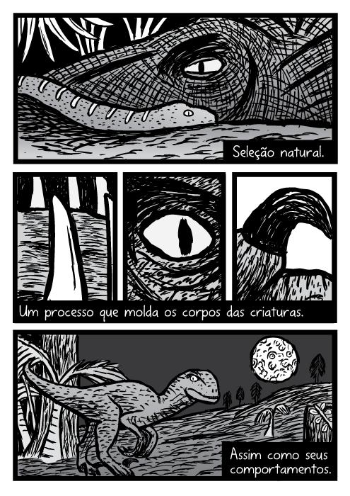 Velociraptor quadrinhos. Dinossauro cartoon. Seleção natural. Um processo que molda os corpos das criaturas. Assim como seus comportamentos.