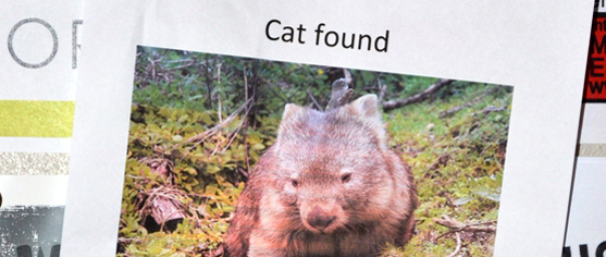 Wombat photo on noticeboard