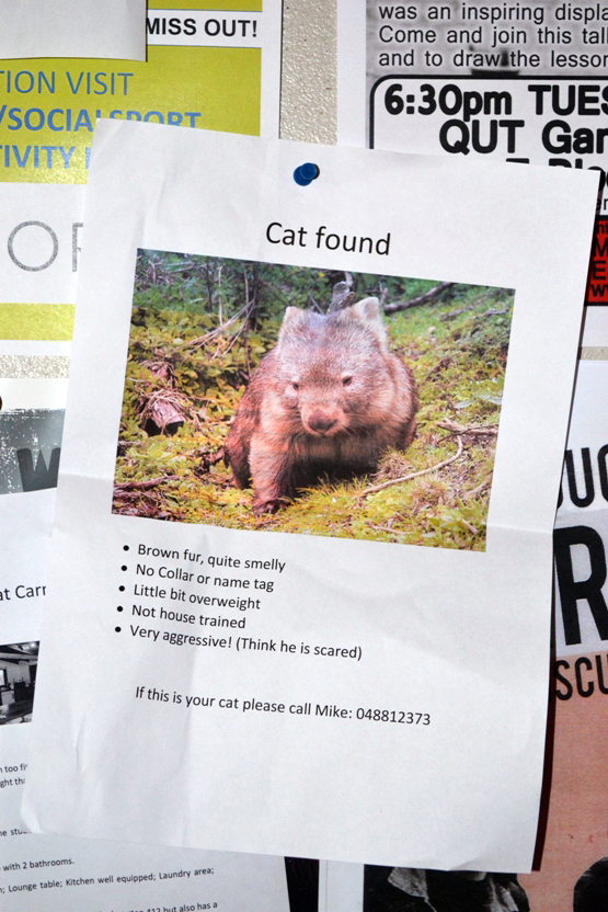 Poster with heading 'Cat Found', but with photo of a wombat. Joke sign.