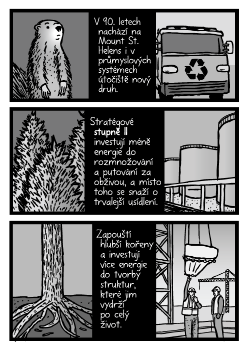 Stromy, kořeny komiks. Stavební průmysl kresba. V 90. letech nachází na Mount St. Helens i v průmyslových systémech útočiště nový druh. Stratégové stupně II investují méně energie do rozmnožování a putování za obživou, a místo toho se snaží o trvalejší usídlení. Zapouští hlubší kořeny a investují více energie do tvorby struktur, které jim vydrží po celý život.