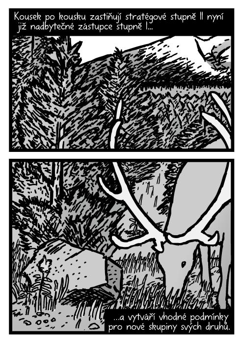 Mladý borovicový les. Los pasoucí se tráva kresba. Kousek po kousku zastiňují stratégové stupně II nyní již nadbytečné zástupce stupně I…a vytváří vhodné podmínky pro nové skupiny svých druhů.