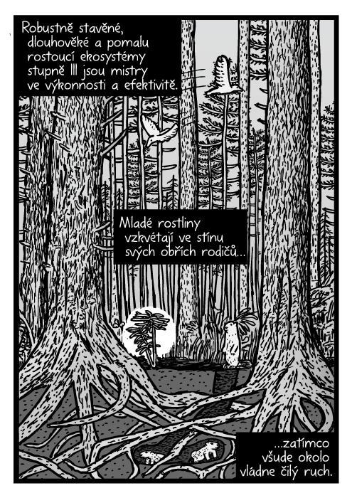 Vzrostlý les borovice komiks. Redwood ekosystém mezidruhová kresba. Robustně stavěné, dlouhověké a pomalu rostoucí ekosystémy stupně III jsou mistry ve výkonnosti a efektivitě. Mladé rostliny vzkvétají ve stínu svých obřích rodičů…zatímco všude okolo vládne čilý ruch.