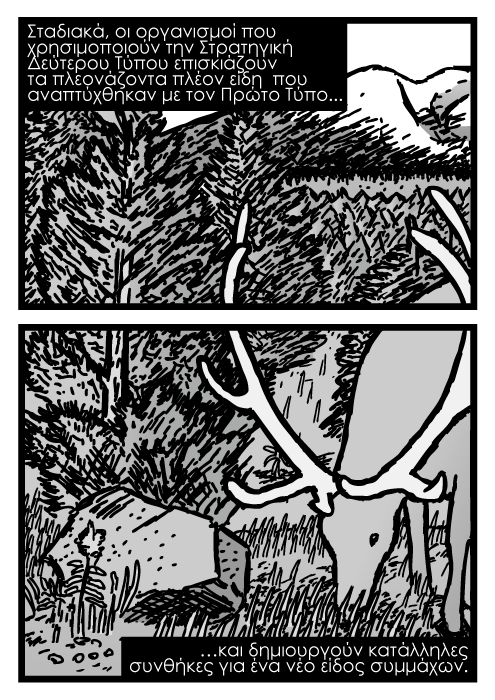 Νεαρά έλατα δάσος καρτούν, ελατόδασος, μεγάλα ελάφια που βόσκουν κόμικ καρτούν. Σταδιακά, οι οργανισμοί που χρησιμοποιούν την Στρατηγική Δεύτερου Τύπου επισκιάζουν τα πλεονάζοντα πλέον είδη που αναπτύχθηκαν με τον Πρώτο Τύπο και δημιουργούν κατάλληλες συνθήκες για ένα νέο είδος συμμάχων.