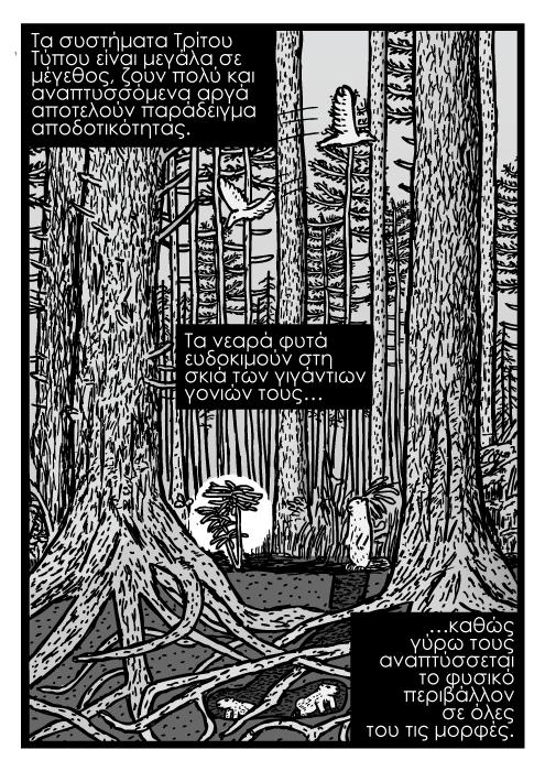 Πευκοδάσος ανεπτυγμένο κόμικς καρτούν, τρυποκάρυδος οικοσύστημα σε ανάπτυξη, διατομή σε δέντρο κόμικς. Τα συστήματα Tρίτου Τύπου είναι μεγάλα σε μέγεθος, ζουν πολύ και αναπτυσσόμενα αργά αποτελούν παράδειγμα αποδοτικότητας. Τα νεαρά φυτά ευδοκιμούν στη σκιά των γιγάντιων γονιών τους καθώς γύρω τους αναπτύσσεται το φυσικό περιβάλλον σε όλες του τις μορφές.
