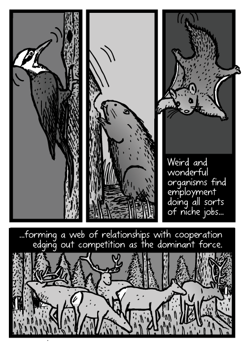 Woodpecker beaver cartoon. Northern Flying Squirrel drawing. Elk deer herd. Weird and wonderful organisms find employment doing all sorts of niche jobs......forming a web of relationships with cooperation edging out competition as the dominant force.