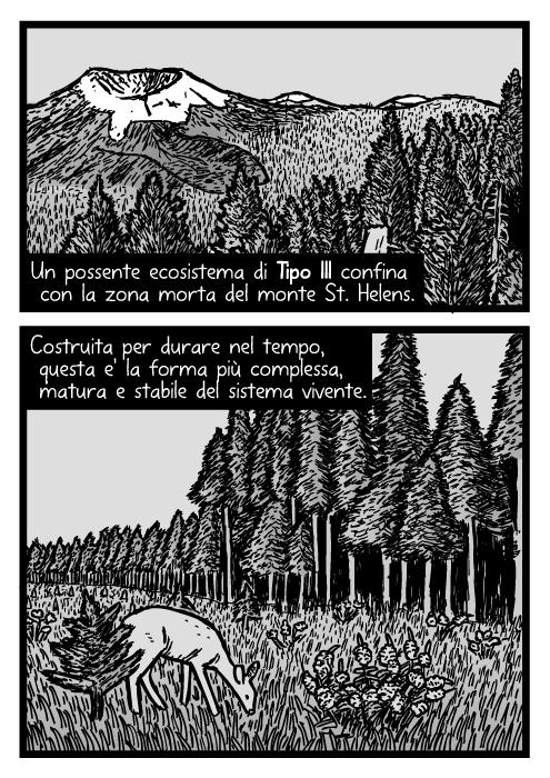 Disegno della foresta matura del monte St. Helens. Vignetta con pini e abeti. Un possente ecosistema di Tipo III confina con la zona morta del monte St. Helens. Costruita per durare nel tempo, questa e' la forma più complessa, matura e stabile del sistema vivente.
