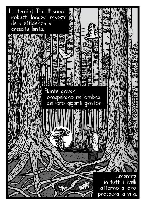 Disegno di una foresta di pini matura. Disegno della sezione dell'ecosistema delle sequoie. I sistemi di Tipo III sono robusti, longevi, maestri della efficienza a crescita lenta. Piante giovani prosperano nell'ombra dei loro giganti genitori mentre in tutti i livelli attorno a loro prospera la vita.