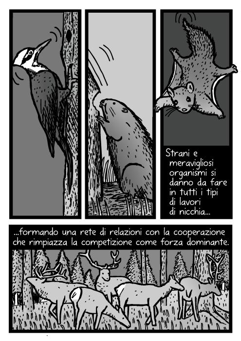 Vignetta di picchio. Disegno dello scoiattolo volante del nord. Alce nel pascolo. Strani e meravigliosi organismi si danno da fare in tutti i tipi di lavori di nicchia formando una rete di relazioni con la cooperazione che rimpiazza la competizione come forza dominante.
