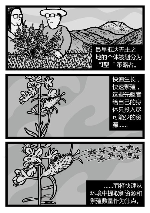 """杂草种子被风吹走的画面。杂草的漫画。最早抵达无主之地的个体被划分为""""I型"""" 策略者。快速生长,快速繁殖,这些先驱者给自己的身体只投入尽可能少的资源……而将快速从环境中提取新资源和繁殖数量作为焦点。"""