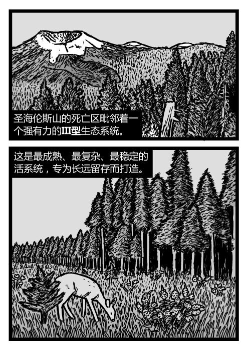 圣海伦斯山的顶级森林群落。杉树猎人平台和松林的卡通图。圣海伦斯山的死亡区毗邻着一个强有力的III型生态系统。这是最成熟、最复杂、最稳定的活系统,专为长远留存而打造。