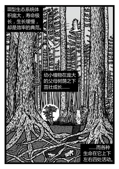 成熟的松林。红木生态系统截面的图景。III型生态系统体积庞大,寿命极长,生长缓慢,却是效率的典范。幼小植物在庞大的父母树荫之下茁壮成长……而各种生命在它上下左右四处活动。
