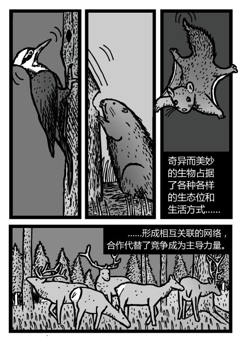 啄木鸟、河狸、鼯鼠、还有驼鹿群的卡通。奇异而美妙的生物占据了各种各样的生态位和生活方式……形成相互关联的网络,合作代替了竞争成为主导力量。
