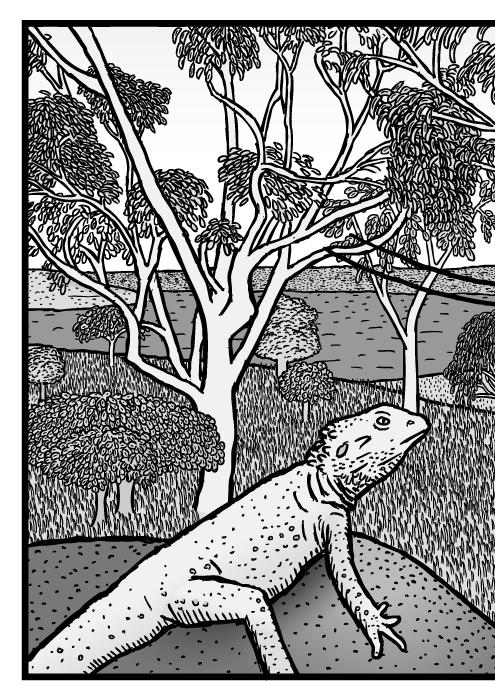 Australská příroda scéna kresba. Strom eukalyptus komiks.