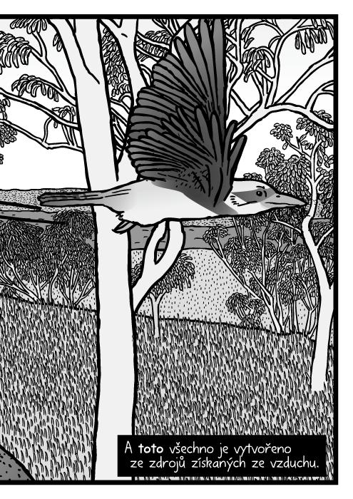 Agama ještěr ledňák pták komiks. A toto všechno je vytvořeno ze zdrojů získaných ze vzduchu.