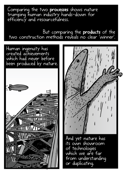 Cartoon blimp above Sydney Harbour Bridge. Lizard climbing tree drawing. Comparing the two processes shows nature trumping human industry hands-down for efficiency and resourcefulness. But comparing the products of the two construction methods reveals no clear 'winner'. Human ingenuity has created achievements which had never before been produced by nature. And yet nature has its own showroom of technologies which we are far from understanding or duplicating.