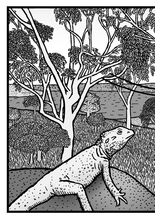 Australian bushland scene drawing. Eucalyptus trees cartoon. Gum tree Bearded Dragon lizard comic.