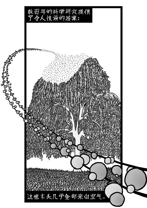 二氧化碳分子。树里的碳水化合物。数百年的科学研究提供了令人惊讶的答案:这些木头几乎全部来自空气。