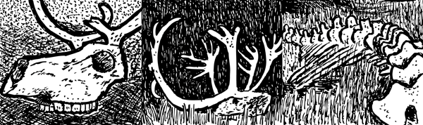 Black and white reindeer skull. Cartoon artwork by Stuart McMillen.