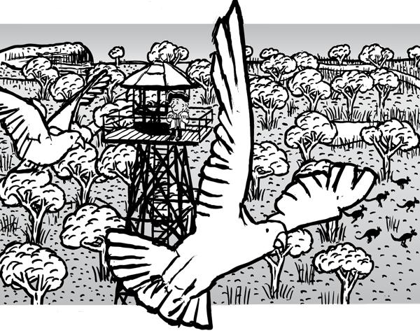 Cockatoo cartoon. Cockatoo flying over outback drawing.