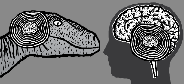 Velociraptor looking at human brain. Cartoon raptor drawing.