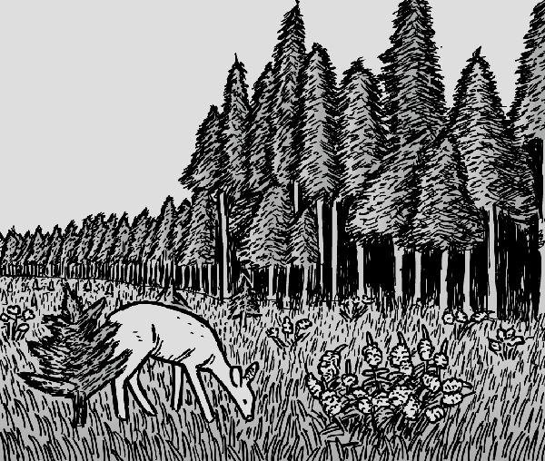 Baby deer stands in forest clearing next to tall trees. Nature drawing. Black and white cartoon.