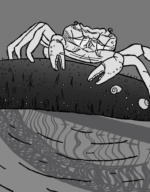 Cartoon rock crab. Crab drawing next to rock pool with Sydney Harbour Bridge reflection.