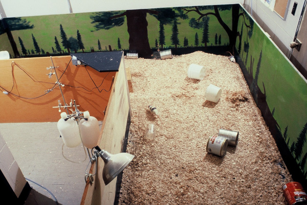 Photograph of Rat Park drug experiment enclosure. Showing rats, tin cans, heat lamp, wood shavings.