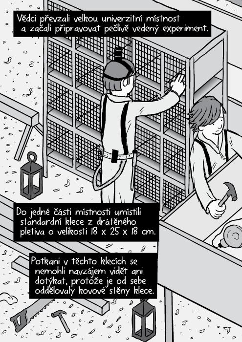 Komiks izometrický pohled laboratorní potkani stojan s klecemi. Vědci převzali velkou univerzitní místnost a začali připravovat pečlivě vedený experiment. Do jedné části místnosti umístili standardní klece z drátěného pletiva o velikosti 18 x 25 x 18 cm. Potkani v těchto klecích se nemohli navzájem vidět ani dotýkat, protože je od sebe oddělovaly kovové stěny klece.