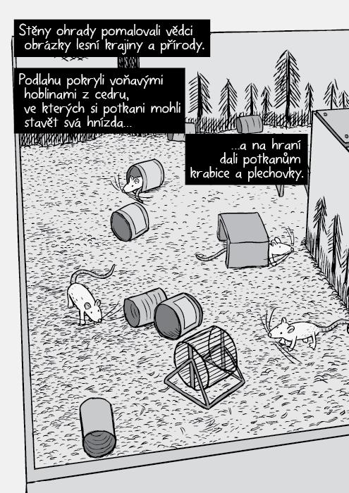 Nadhled potkaní rezidence. Komiks potkani, plechovky, kola na běhání. Stěny ohrady pomalovali vědci obrázky lesní krajiny a přírody. Podlahu pokryli voňavými hoblinami z cedru, ve kterých si potkani mohli stavět svá hnízda… …a na hraní dali potkanům krabice a plechovky.
