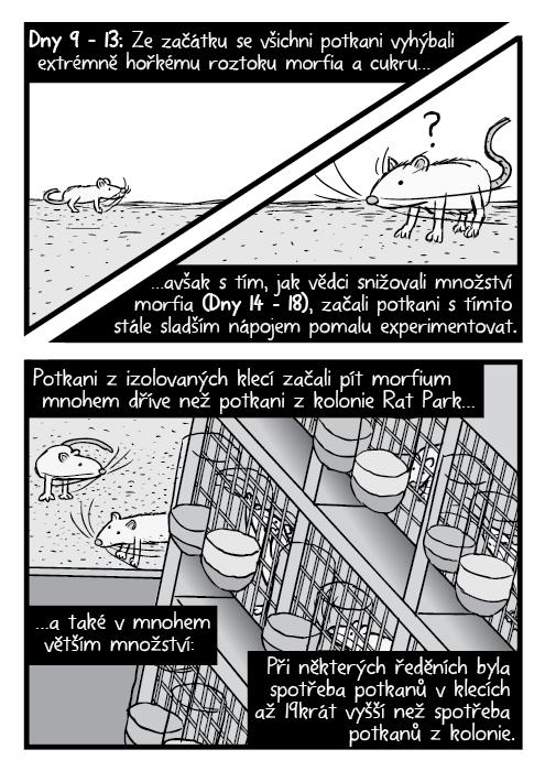 Laboratorní potkani nadhled kresba. Komiks Rat Park potkaní klece. Dny 9 – 13: Ze začátku se všichni potkani vyhýbali extrémně hořkému roztoku morfia a cukru… …avšak s tím, jak vědci snižovali množství morfia (Dny 14 – 18), začali potkani s tímto stále sladším nápojem pomalu experimentovat. Potkani z izolovaných klecí začali pít morfium mnohem dříve než potkani z kolonie Rat Park… …a také v mnohem větším množství: Při některých ředěních byla spotřeba potkanů v klecích až 19krát vyšší než spotřeba potkanů z kolonie.